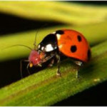The Good, The Bad and The Ugly Part 1: Natural Pest Control