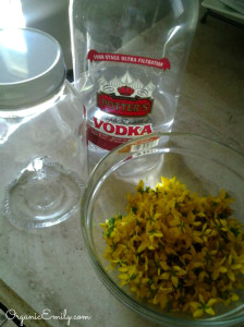 St. John's Wort prep for tincture