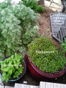 Peppmint and Lemon Balm