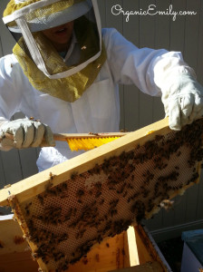 Brushing Bees off Frames