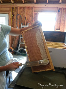 Decapping Honey