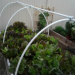 Extending the Growing Season with Hoop Houses