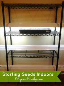 Seed Stand