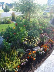 Companion Planting Front Yard