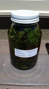 Arnica herb oil 2