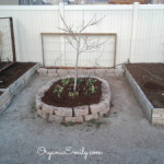 Pruning Class and Successful Organic Gardening Tips – March 7th, 2020