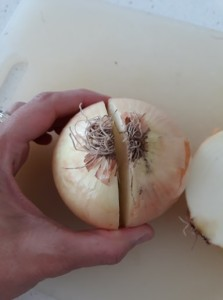 Onion cut in half