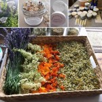 Basic Herbal Workshop and Herb Walks – Enrolling Now!